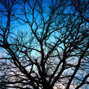OAK NIGHT SKY 4x5m