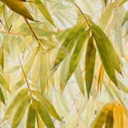 Bamboo Acid Yellow