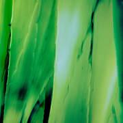 Aloe Bright Green