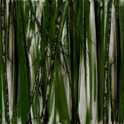 Tanbo Spruce