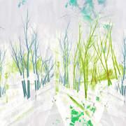 Kigi Bamboo grove