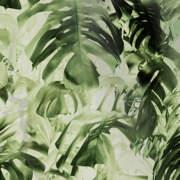 Monstera Deliciosa Green