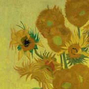 VAN200329 Sunflower mural 280x300cm