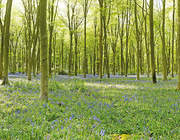 BLUEBELL WOOD 4x28.7m