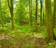 THETFORD FOREST SPRING 3x19.3m