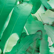 Banana Leaf Green