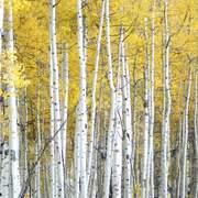 Trees Yellow